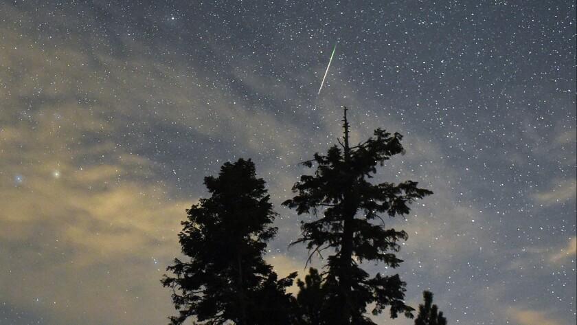 A Perseid meteor streaks across the sky above desert pine trees in Spring Mountains National Recreation Area near Las Vegas.