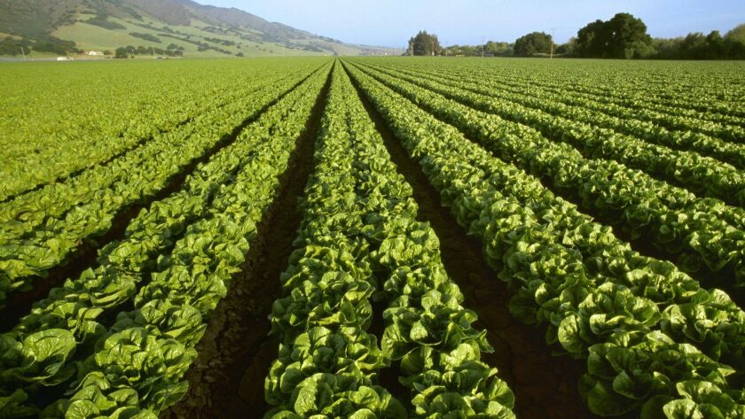 Romaine lettuce grows below the Santa Lucia Mountains in the Salinas Valley.