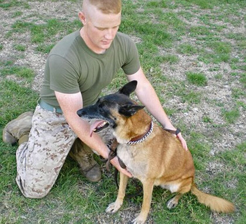 Military's dogs of war also suffer post-traumatic stress disorder
