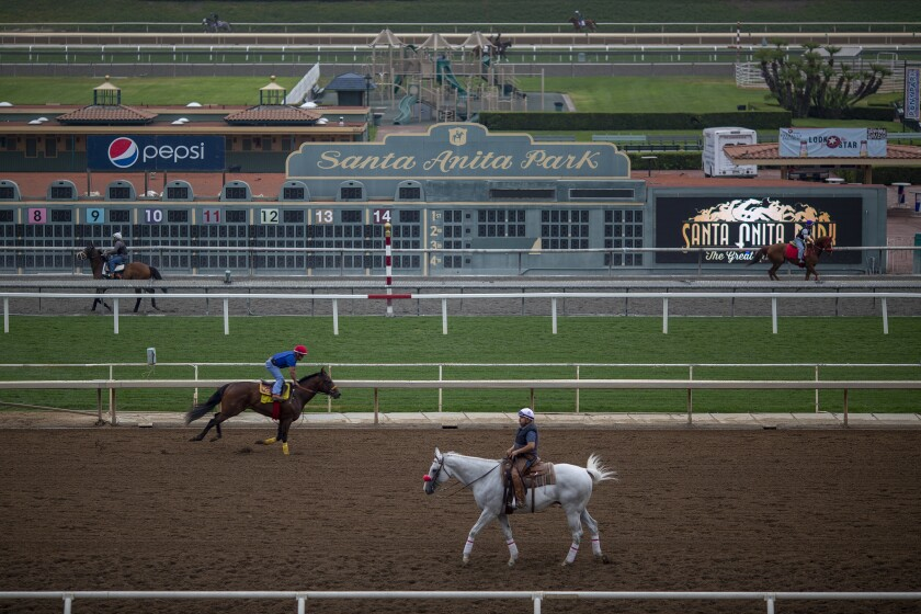 Race horses are seen during their morning workout at Santa Anita Park racetrack in Arcadia.