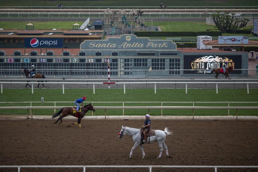 Horses train at Santa Anita Park in June.