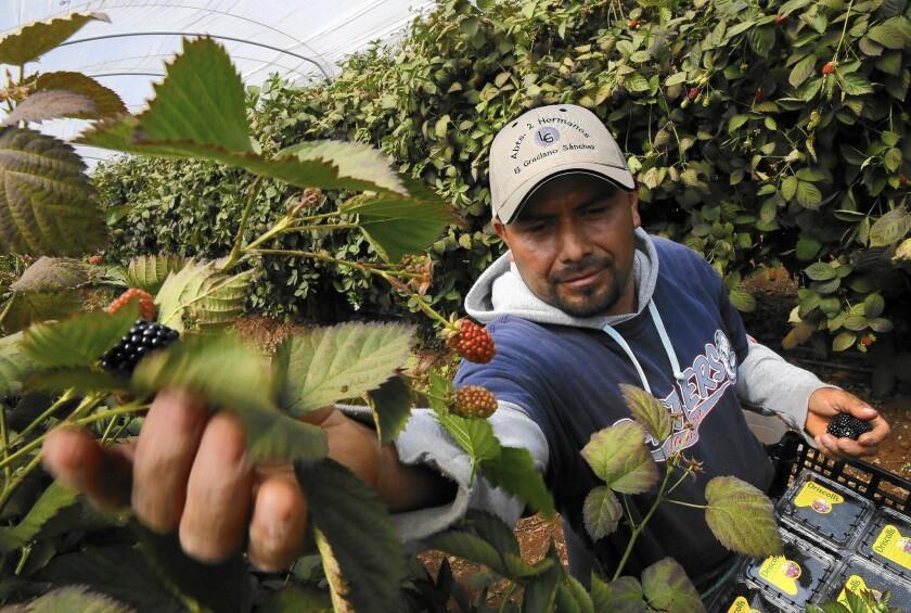 la-2430114-me-0604-mexico-labor-agreement-10-dpb-20150929