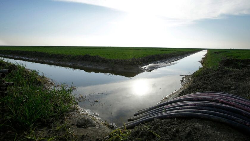 FILE - In this Feb. 25, 2016 file photo, water flows through an irrigation canal to crops near Lemoo