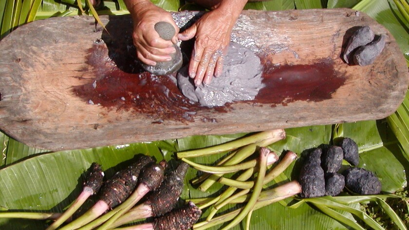 Demonstrations of how the roots of the taro plant are pounded into poi will be part of the April 25 activities at the East Maui Taro Festival.