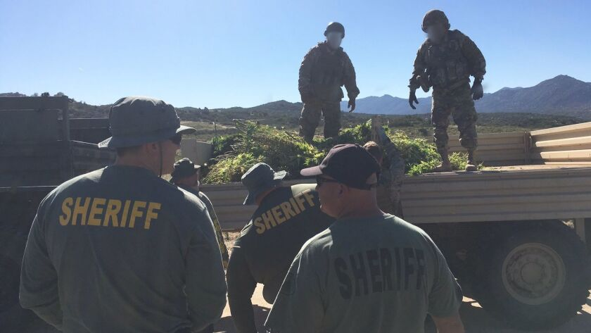 Illegal pot growers targeted by Riverside County officials in second raid in 6 weeks