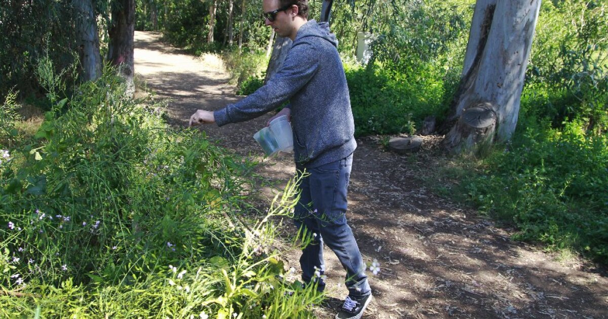 Readers tore into food story on foraging – Technology Breaking News