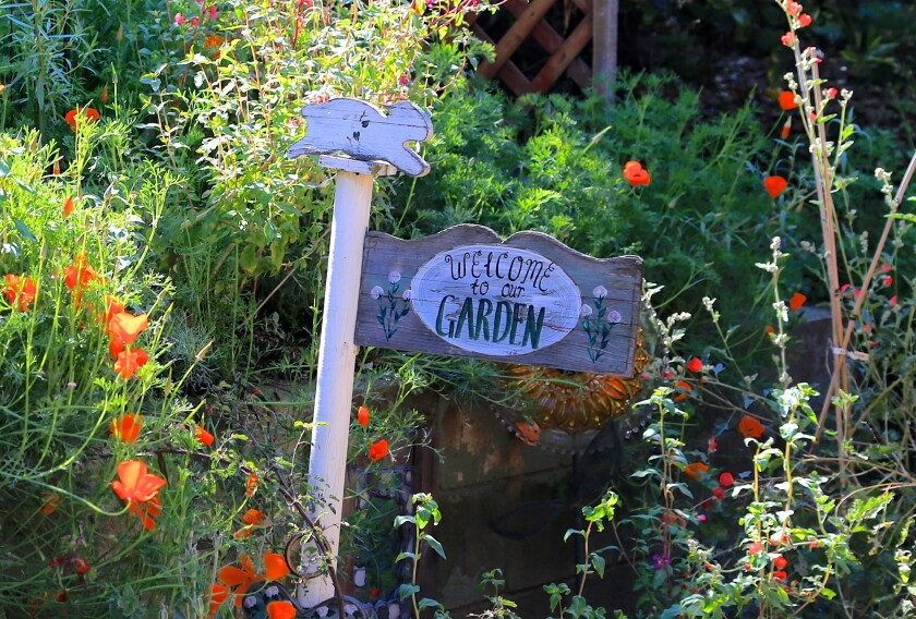 Viewers can follow a self-guided virtual tour of five gardens in East County.