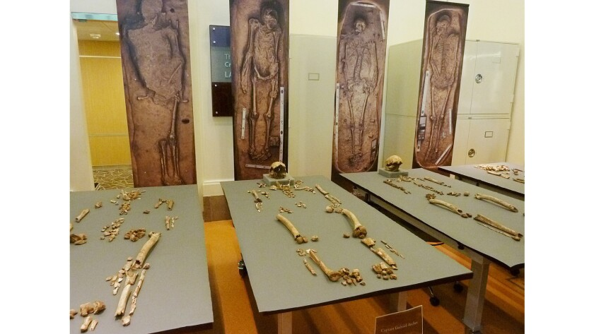 The bones of four of the early leaders of Virginias's Jamestown settlement are displayed at the Smithsonian Institution in Washington.