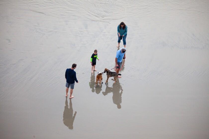 Solana Beach City Council approves animal services contract