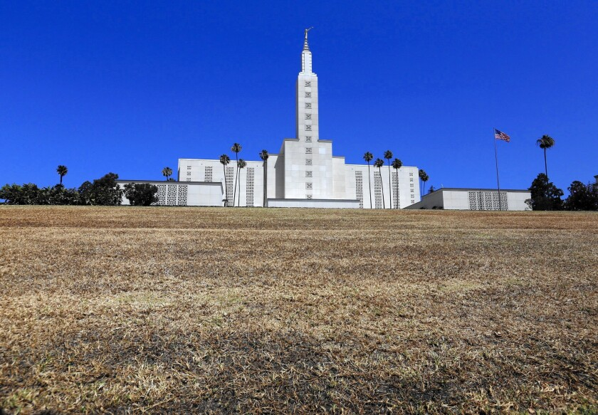 The once-green grass in front of the Mormon Temple on Santa Monica Boulevard in West L.A. has become parched since the church stopped watering it about a month ago because of the drought.