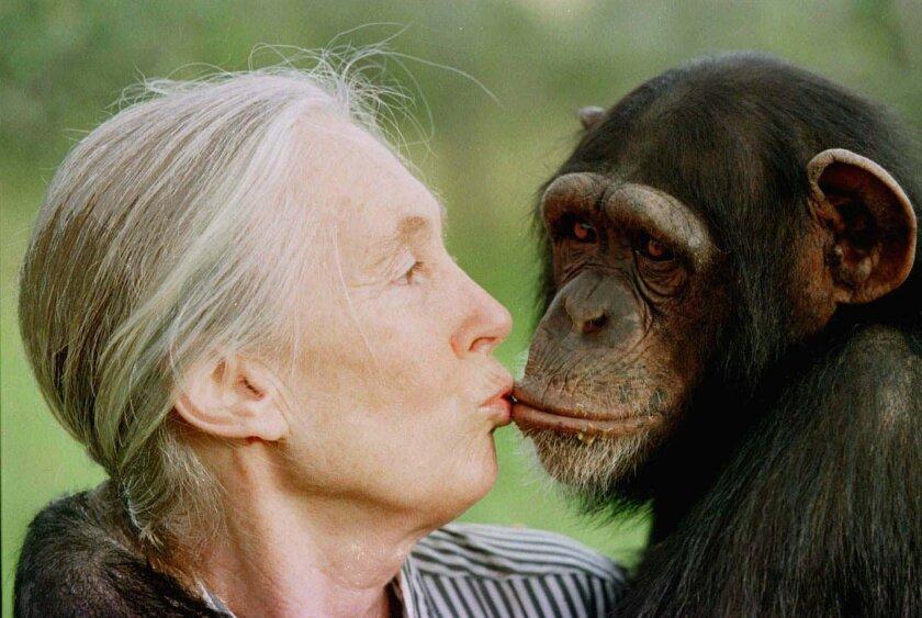 Jane Goodall with Tess, a chimpanzee