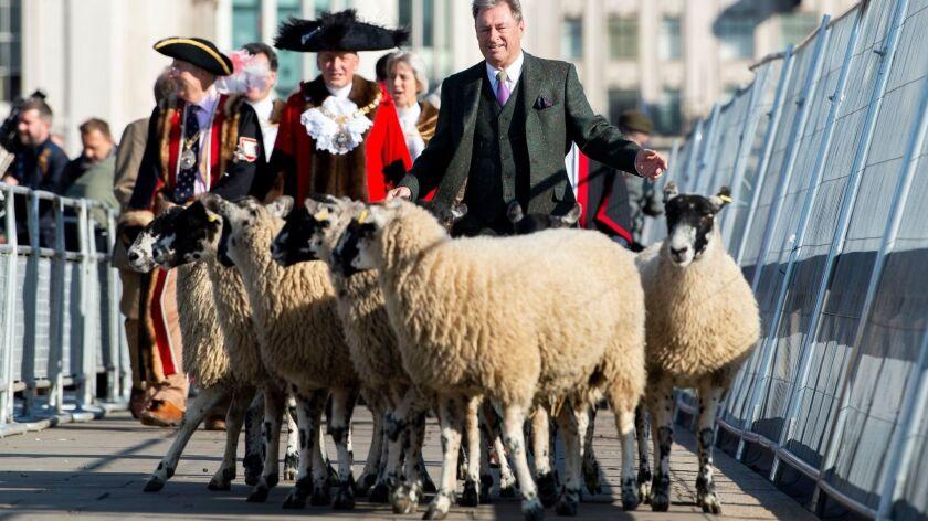 Annual Sheep Drive across London Bridge, United Kingdom - 30 Sep 2018