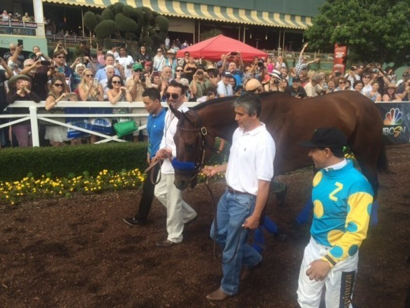 American Pharoah was paraded around Santa Anita Saturday, but the horse looked antsy and nervous toward the end in the winner's circle.