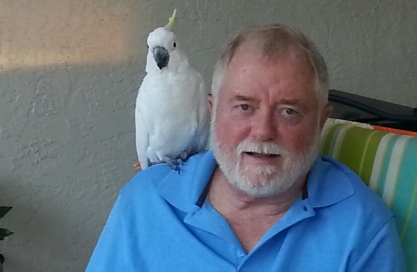 Joe Morrison and Fred, a sulphur-crested cockatoo that escaped from its Carlsbad aviary and appears to be happily living with crows. Courtesy of Joe Morrison