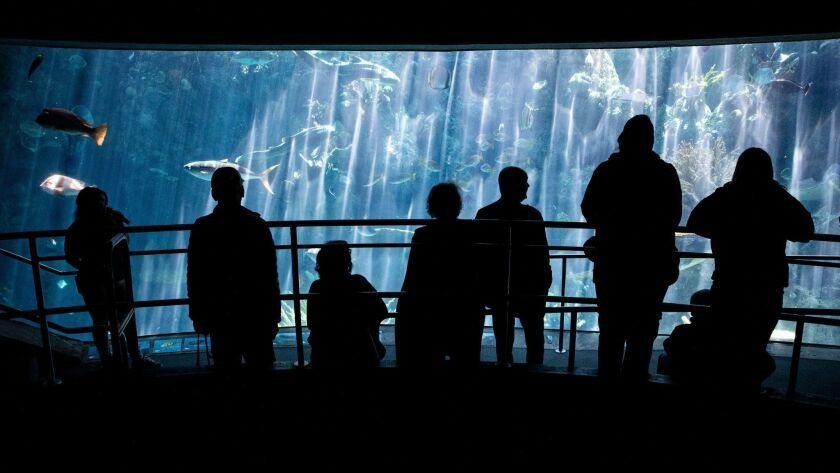 Long Beach Aquarium enveils new Pacific Vision wing, Los Angeles, USA - 16 May 2019