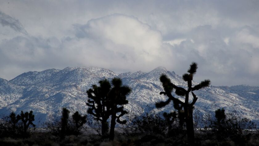 ADELANTO, CALIF. -- TUESDAY, FEBRUARY 5, 2019: Joshua Trees are silhouetted by snow-capped mountains