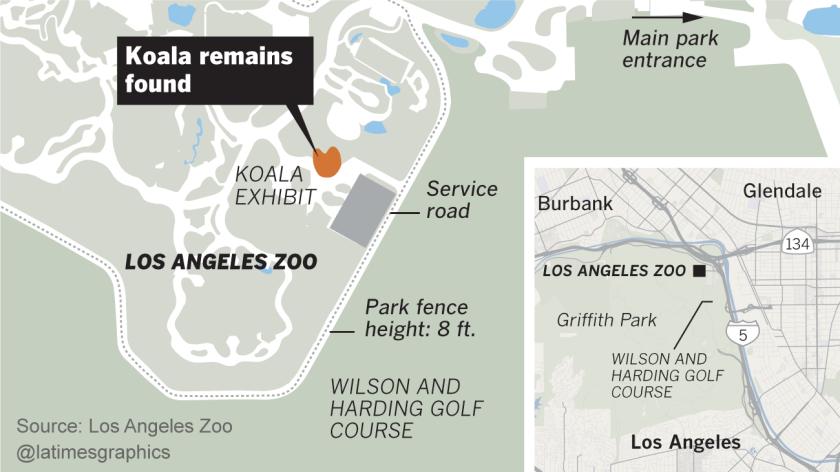 L.A. Zoo koala killed by cougar