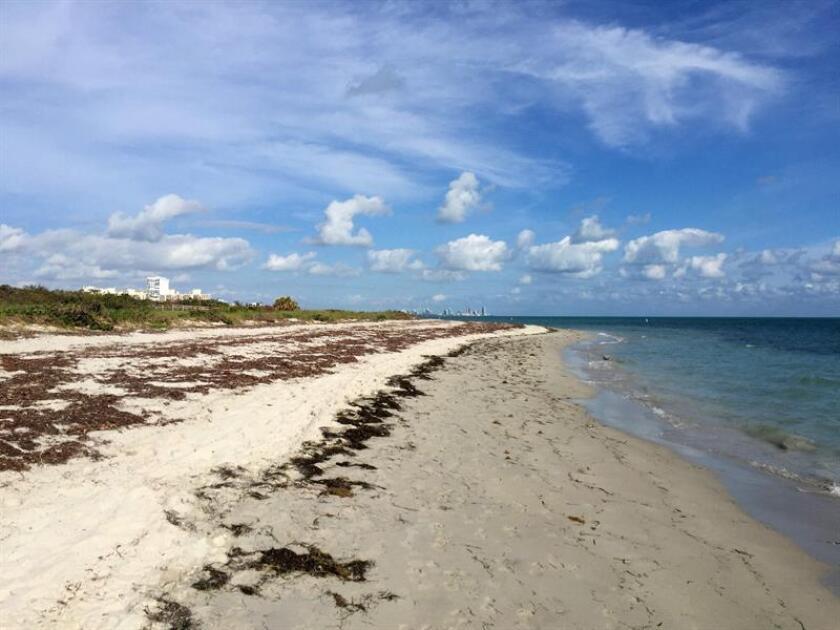 Fotografía sin fecha específica, de la playa de Bill baggs en Cayo Vizcaíno, Miami, Florida (EE.UU.). Más de la mitad de las playas de Florida son propiedad privada y por más que en muchas de ellas se permita o consienta el acceso del público, existe el riesgo de que los amantes del sol y del mar acaben, como Adán y Eva, expulsados del paraíso. Una nueva ley estatal sobre propiedad privada que entrará en vigor este 1 de julio establece cambios en la manera en que los municipios de Florida pueden actuar para garantizar el acceso del público a las playas, un asunto de mucha importancia para un estado en el que el turismo es la industria número uno. EFE