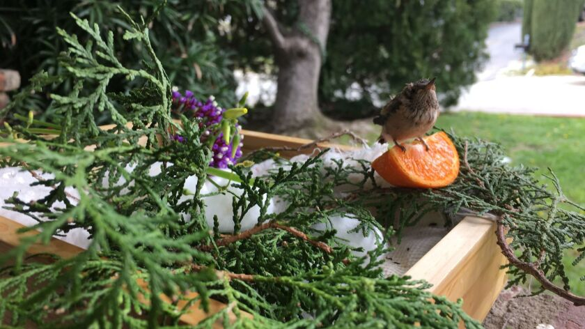 """""""What's another mouth to feed?"""" he asked two weeks ago when the baby hummingbird showed up in the front yard."""