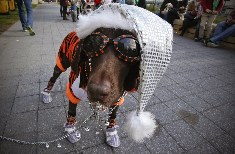 Gaslamp holiday pet parade 2013