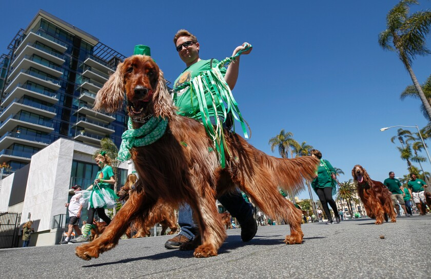 St. Patrick's Day Parade by Hayne Palmour IV.jpg