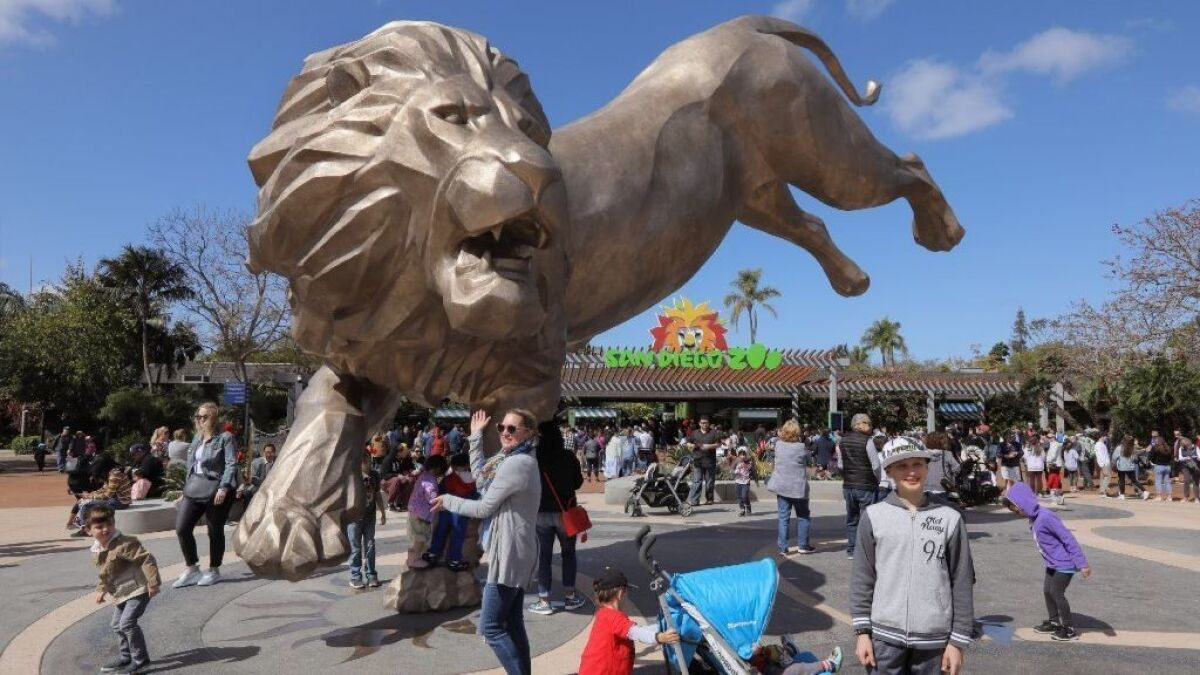 Rex the lion returns to San Diego Zoo — in bronze - The San