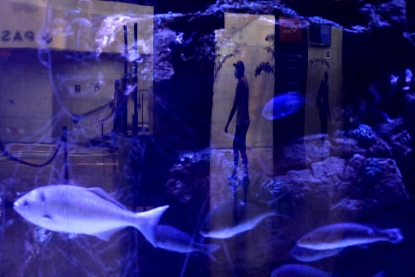 A traveler's reflection seen on a piece of art.