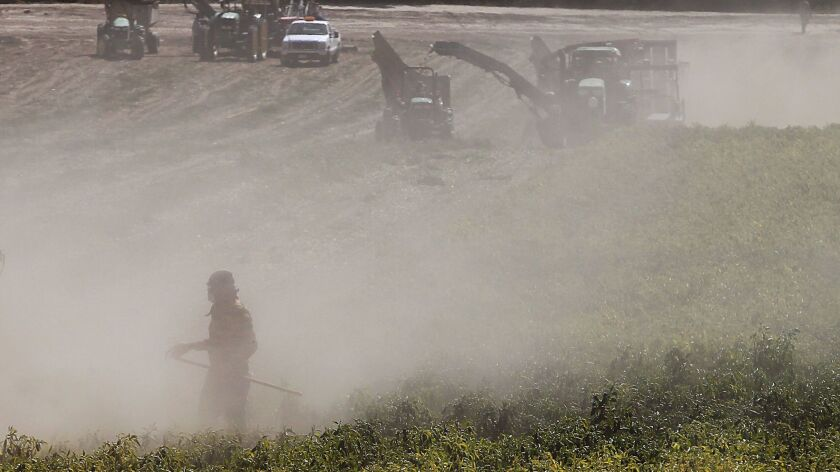 NEWHALL, CALIF. - OCT. 3, 2013. Farmworkers and farm equipment are shrouded in dust stirred up by w