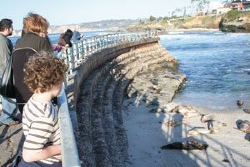 Visitors look at seals on the Childrens Pool beach in La Jolla. Photo: File