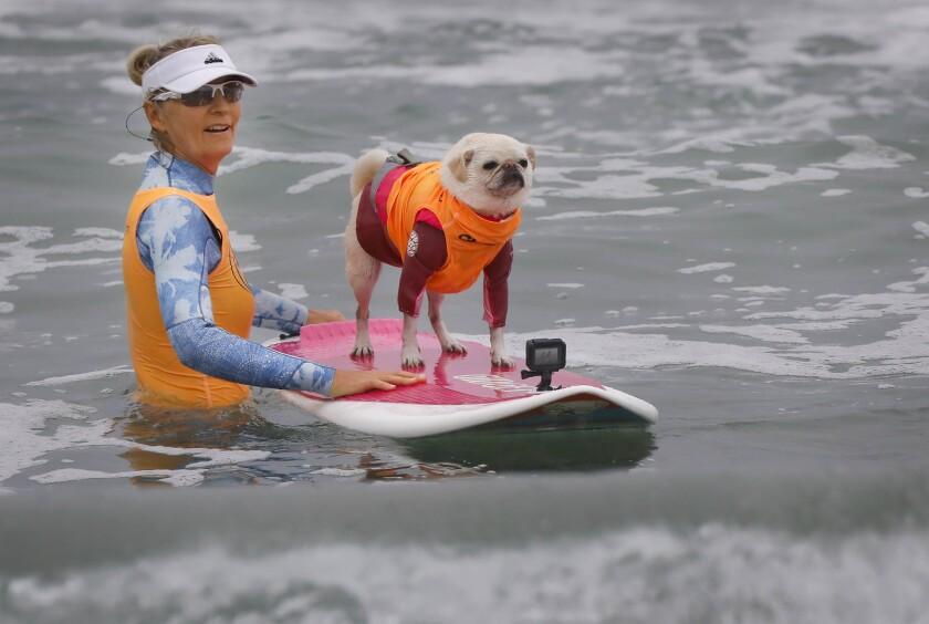 Dogs stay cool at Imperial Beach Surf Dog Competition - The