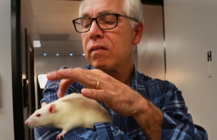 Reporter Gary Robbins in the lab of UCSD professor and cognitive scientist Andrea Chiba, who studies the socialization of rats.