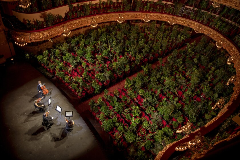 """Musicians rehearse at the Gran Teatre del Liceu in Barcelona, Spain, Monday, June 22, 2020. The Gran Teatre del Liceu reopens its doors, in which the 2,292 seats of the auditorium will be occupied on this occasion by plants. It will be on 22 June, broadcast live online, when the UceLi Quartet string quartet performs Puccini's """"Crisantemi"""" for this verdant public, brought in from local nurseries. (AP Photo/Emilio Morenatti)"""