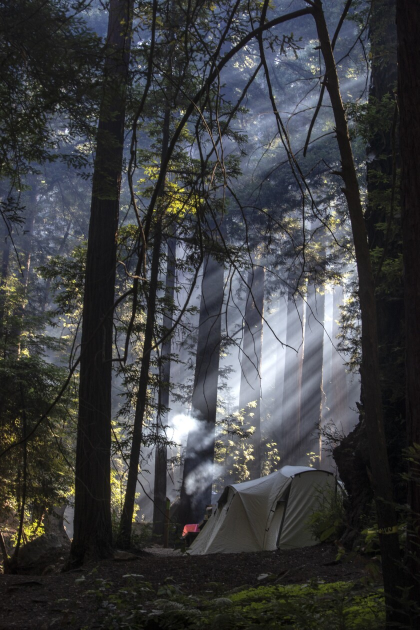 BIG SUR, CALIF. -- FRIDAY, AUGUST 3, 2018: Smoke from early morning campfires filters through redwoo