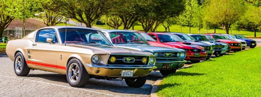 -Mustangs-1.jpg