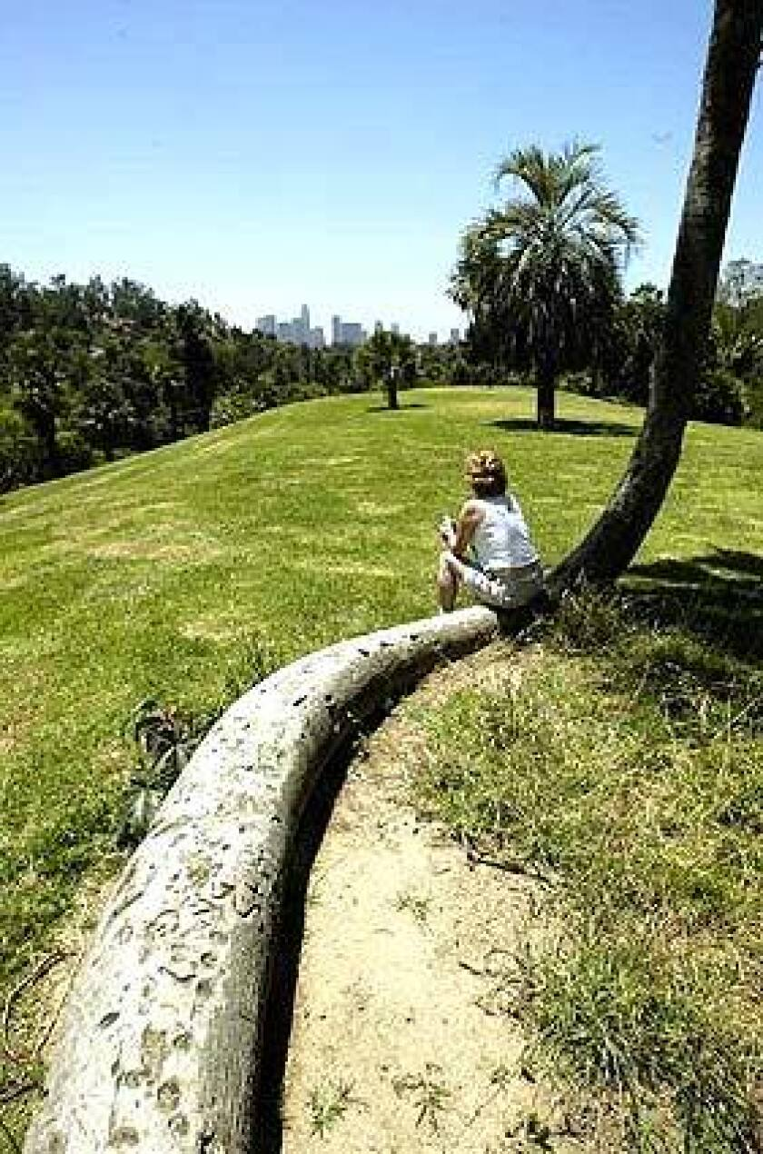 Olga Rothenbecker of Echo Park rests on the snaking trunk of a palm tree at Chavez Ravine Arboretum. Rare palm specimens were planted on Palm Hill in 1972.