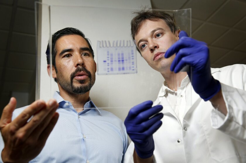 Synthorx president and CEO Court Turner and scientist Denis Malyshev look at a protein purification gel. The gel visualizes the quality of the protein, so that the final protein is pure.