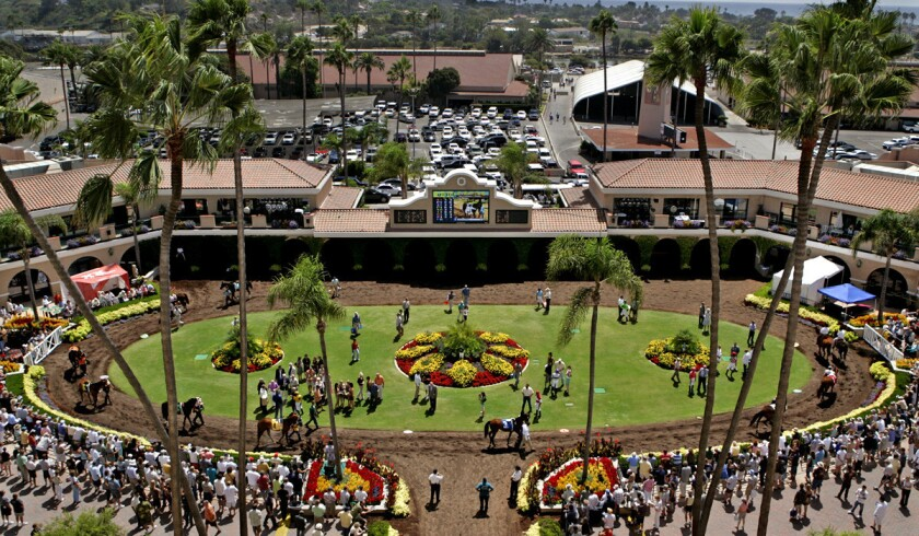 Horses warm up in the paddock before a race at Del Mar.