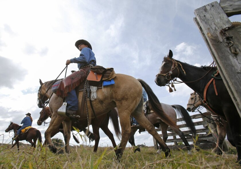 In this Tuesday, Jan. 26, 2016 photo, riders arrive for lunch during the Great Florida Cattle Drive 2016, in Kenansville, Fla. Spanish explorers brought horses and Andalusian cattle to the New World in the 16th century, making Florida the nation's oldest cattle-raising state. (AP Photo/Wilfredo Lee)
