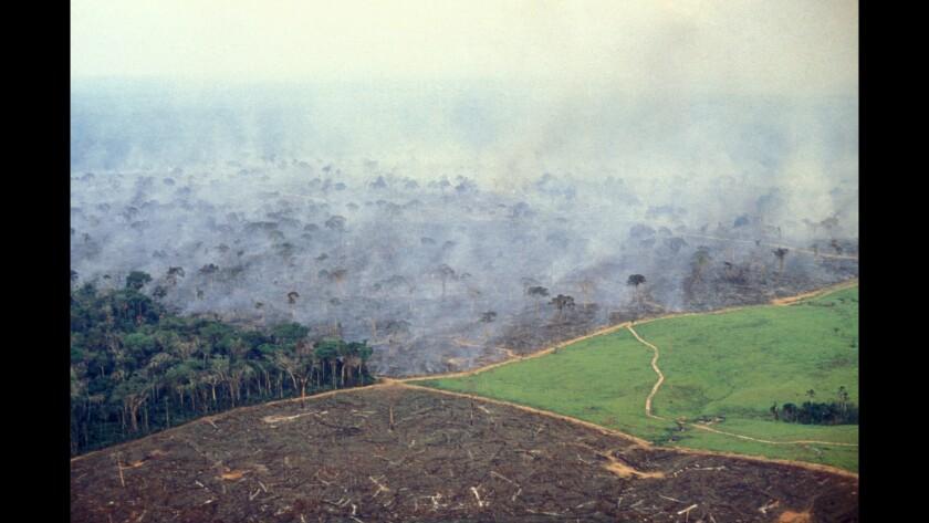 Stages of deforestation in Brazil