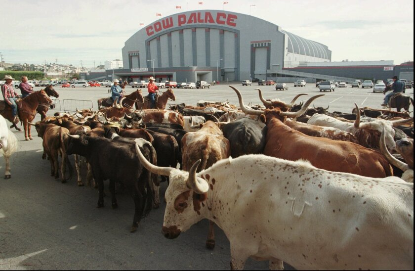 FILE - In this Oct. 4, 1997 file photo, a herd of cattle is led into the parking lot of the Cow Palace during the cattle drive to the 53rd Grand National Rodeo in San Francisco. The San Jose Sharks have come a long way from their original home at the Cow Palace with its undersized ice rink and ling