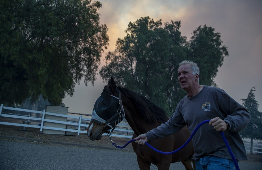 Horses are evacuated from Castle Rock Farms amid the Easy fire in Simi Valley