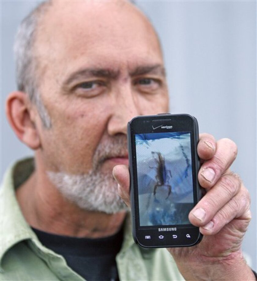 Jeff Ellis of West Linn, shows the cell phone image of the scorpion which stung him while he was trying to sleep on a red-eye Alaska Airlines flight on June 17 during a interview Thursday, June 30, 2011, in Portland, Ore.  The Oregon man got a big surprise on a commercial flight from Seattle to Anc