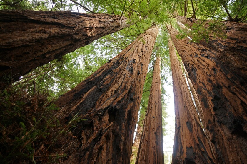 Big Basin Redwoods State Park near Santa Cruz is among the parks you can go to for free on Black Friday.
