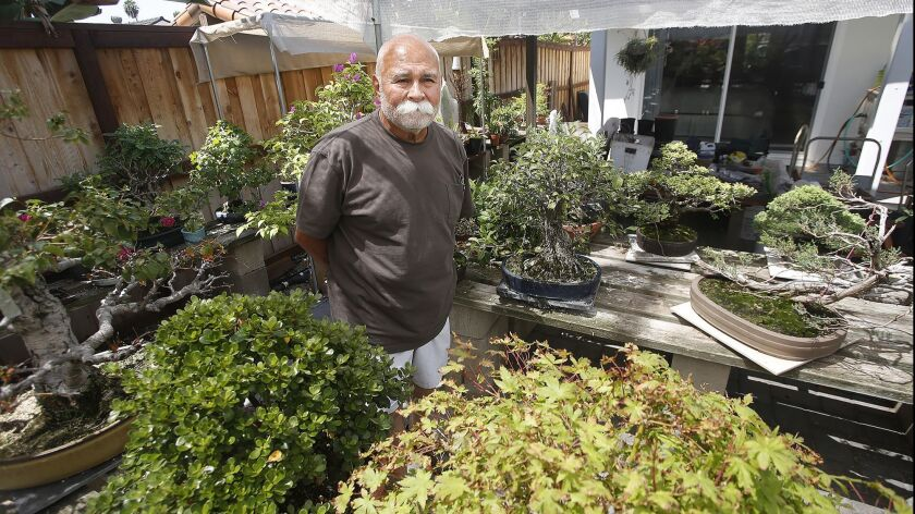 Manny Martinez walks through his backyard bonsai tree gallery in Lake Forest on recent afternoon. The annual Bower's Museum bonsai tree exhibit, which Martinez curated, concludes Sept. 9.