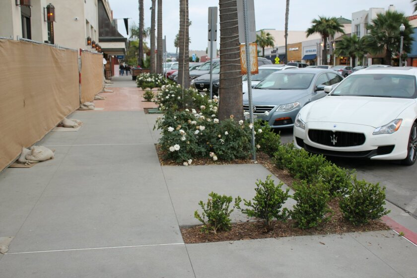These boxwood hedges will grow to about three feet. A resident is concerned they will block access to the sidewalk.