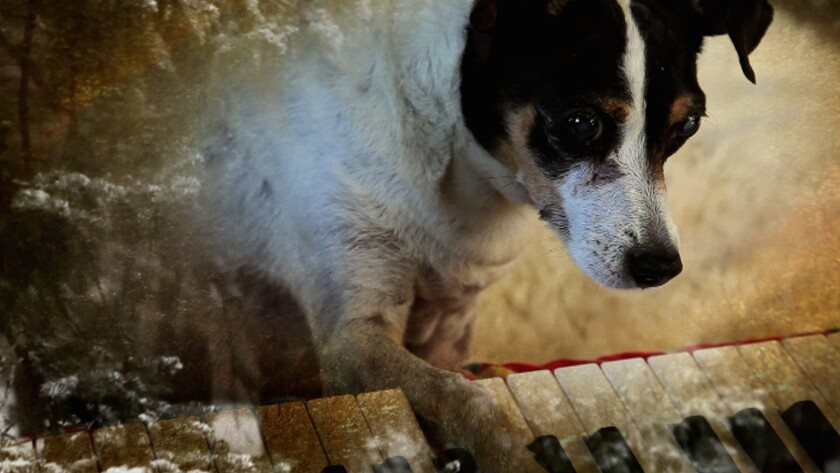 """A scene from Laurie Anderson's """"Heart of a Dog, in part a loving tribute to her late rat terrier Lolabelle."""