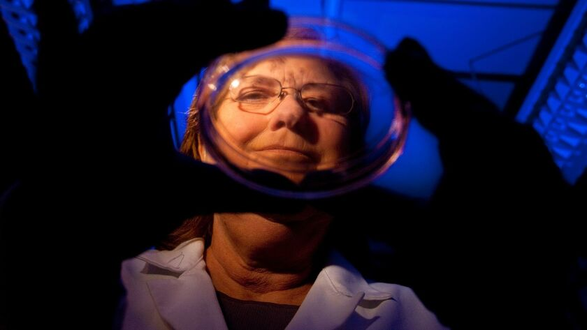 Stem cell scientist Jeanne Loring holds a petri dish with induced pluripotent stem cells.