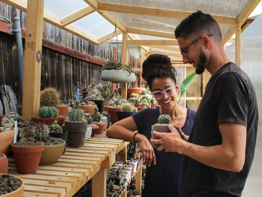 A woman and a man look at a potted cactus next to a shelf full of them.