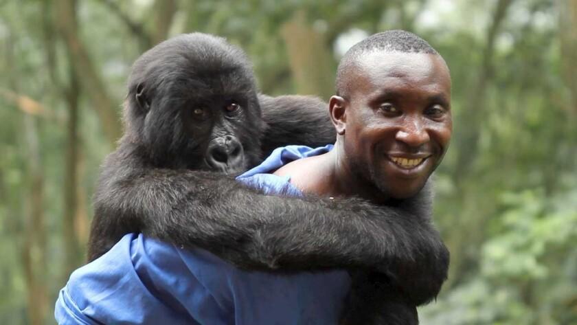 "Andre and Ndakasi in a scene from the film ""Virunga."""