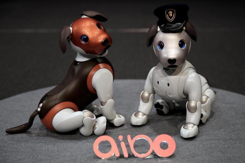 Una joven interactúa con el perro robótico Aibo de Sony este miércoles, durante un evento de prensa, en la sede de la empresa en Tokio (Japón). EFE